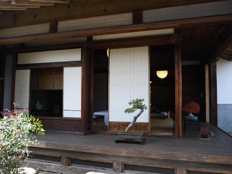 20140426_bonsai2