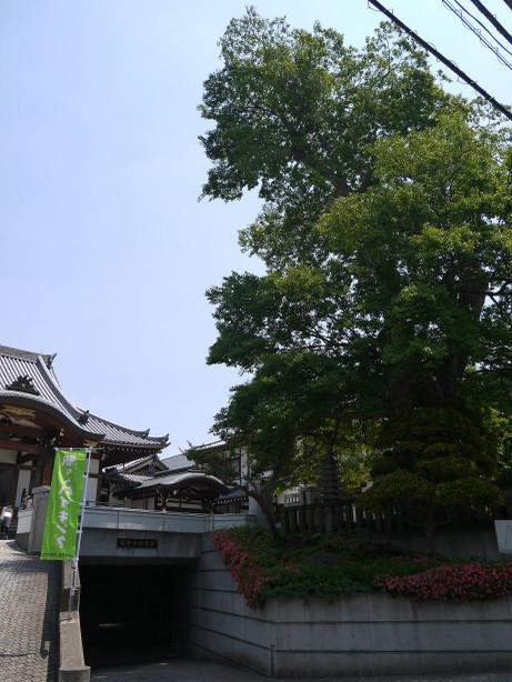 20140530_mukunoki2