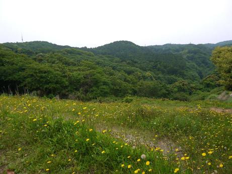 20140609_segami_siminnomori1