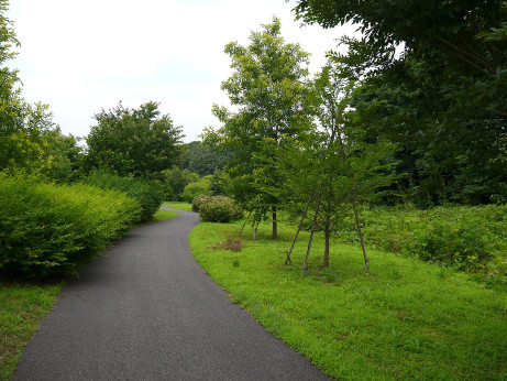 20140714_road1