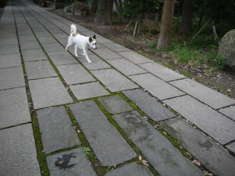 20140802_dog