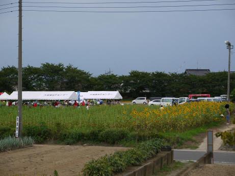 20140826_himawari08