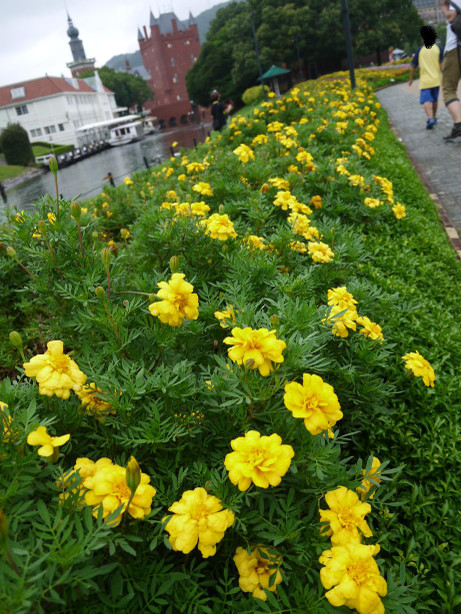 20140830_flower_road_03