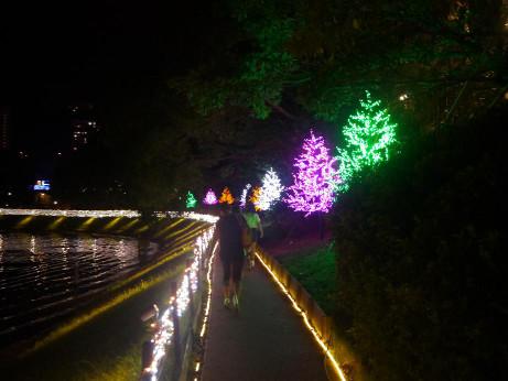20140901_tree_road_01