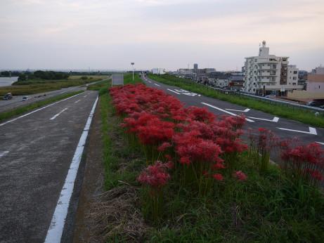 20140924_higanbana_07
