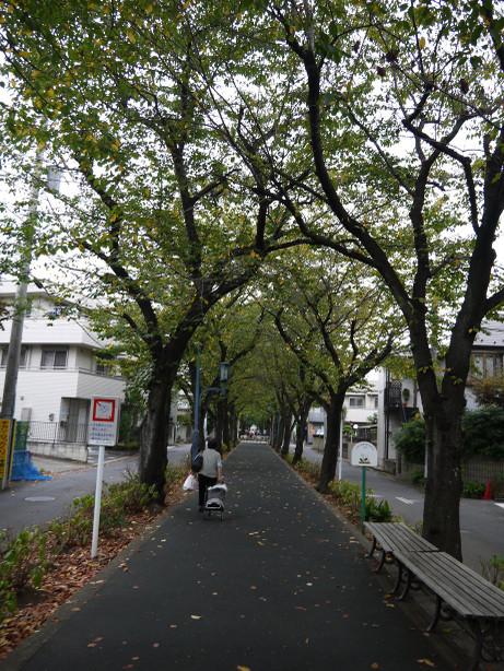 20141011_hodou_4