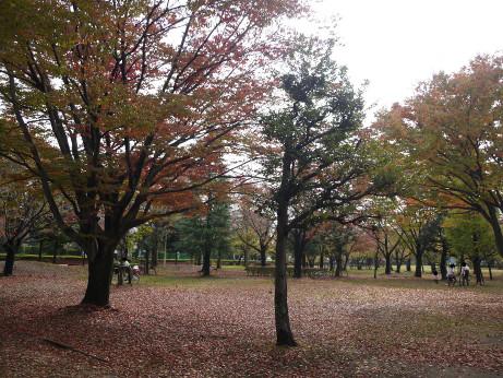 20141104_waseda_park_1