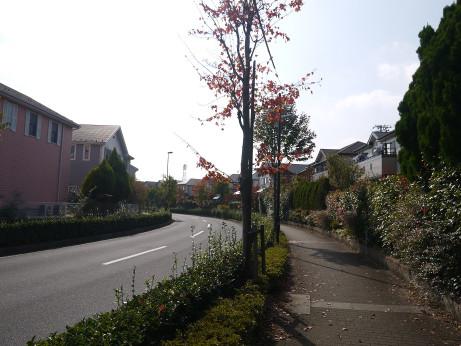 20141125_road_11