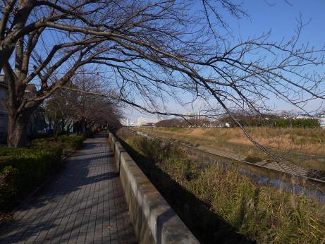 20150110_kasiogawa_03