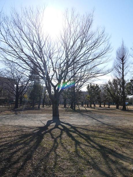 20150112_tree