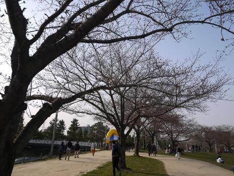 20150324_sakura