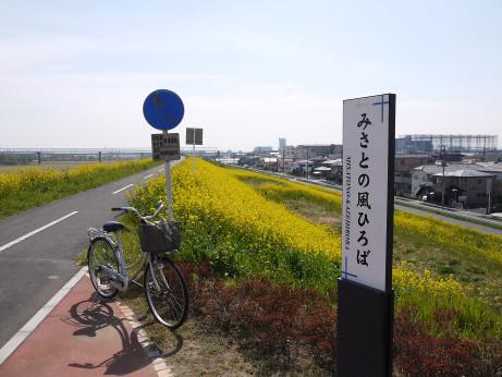 20150329_nanohana_02