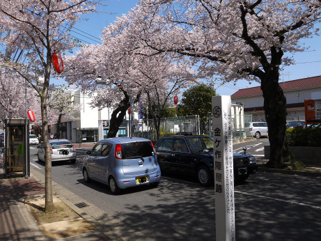 20150405_tokiwadaira_sakura_02