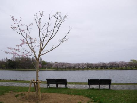 20150407_bench
