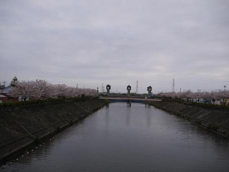 20150410_sakura_03