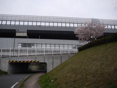 20150410_sakura_05