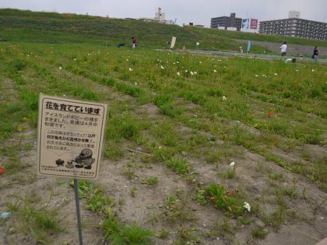 20150510_flower_1