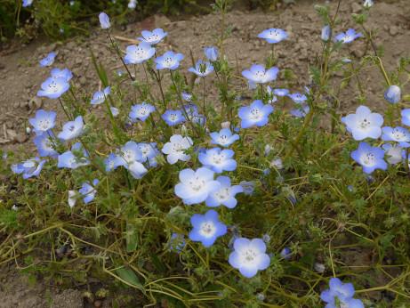 20150510_flower_2