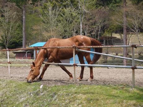 20150516_horse_2