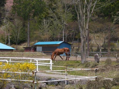 20150516_horse_4