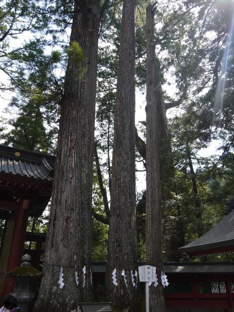 20150519_oyakosugi