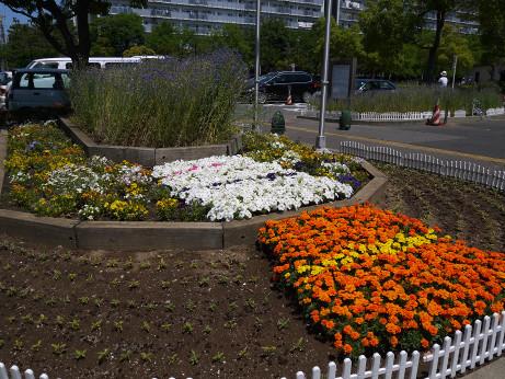 20150602_flower
