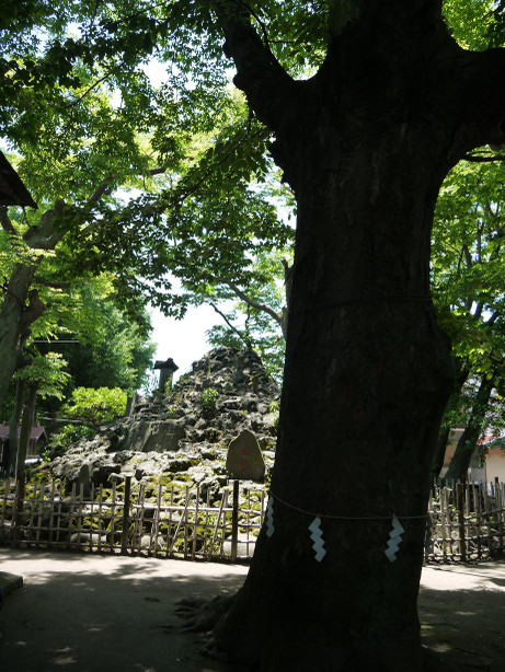 20150604_tree
