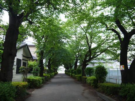 20150705_road_02
