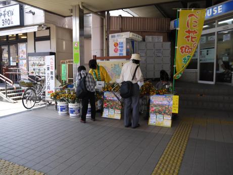 20150713_benibana_hanbai