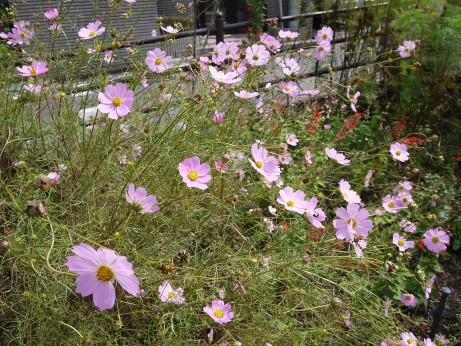 20151002_flower_road_3