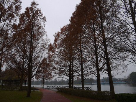 20151215_park_3_2