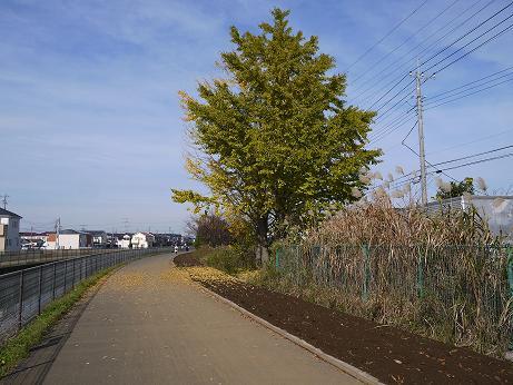 20160107_fureai_road_4