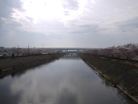 20160413_sakura_05