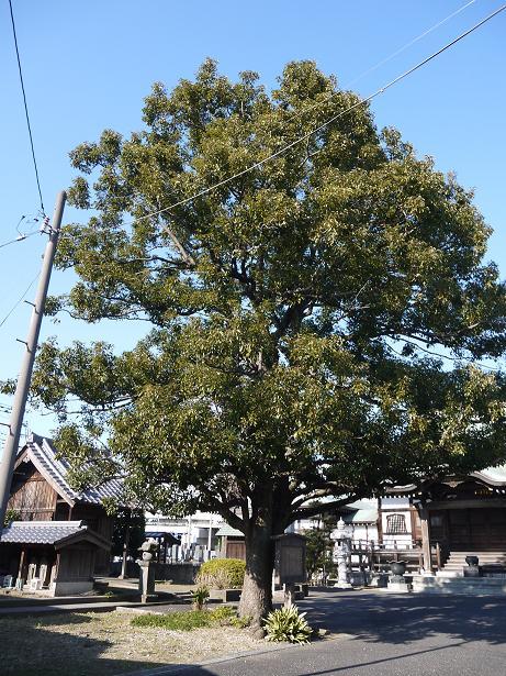 20170115_tree