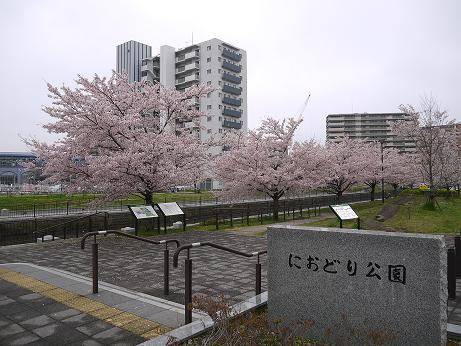 20170415_sakura_01