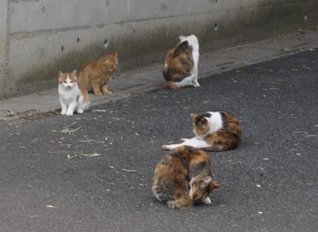 20171214_cat