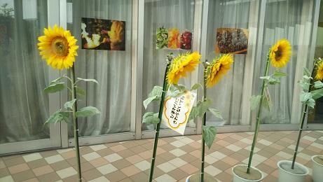 20190820_himawari