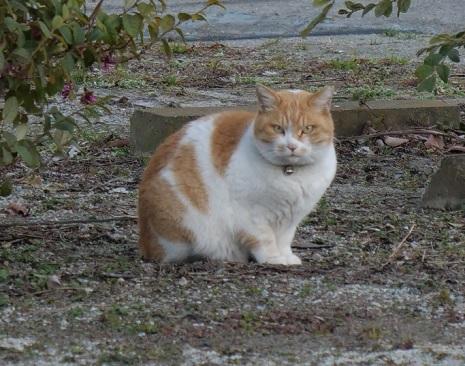 20200214_cat