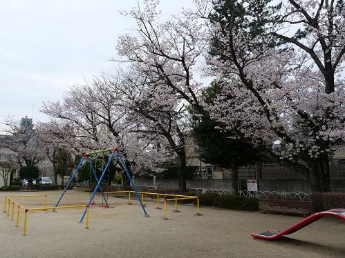 20200331_sakura_1