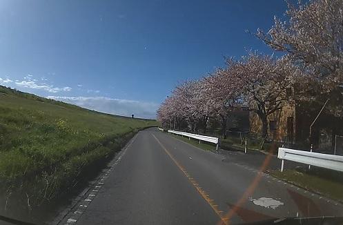 20200409_sakura_04