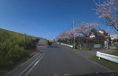 20200409_sakura_06