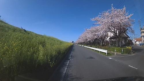 20200409_sakura_07