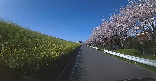 20200409_sakura_08