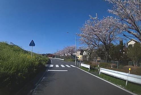 20200409_sakura_09