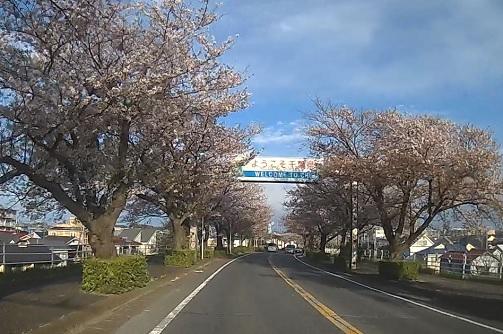 20200419_sakura_01