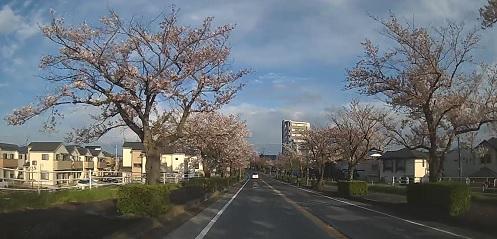 20200419_sakura_05
