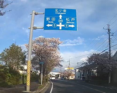 20200419_sakura_07