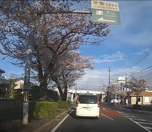 20200419_sakura_08