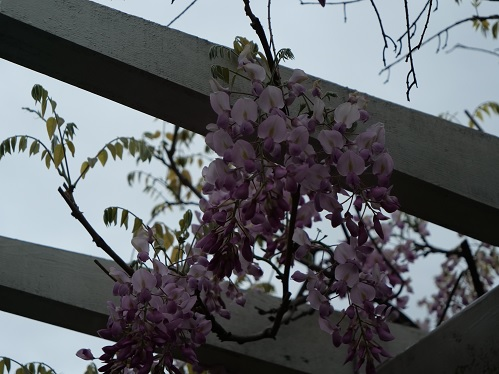 20200420_fuji_03