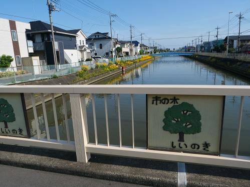 20200519_kiku_02
